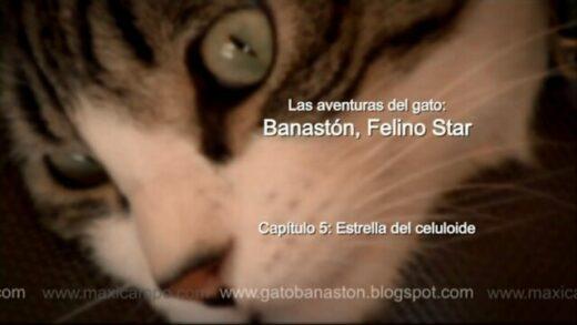 """Banastón, Felino Star - Capítulo 5 """"Estrella del celuloide"""" de Maxi Campo"""