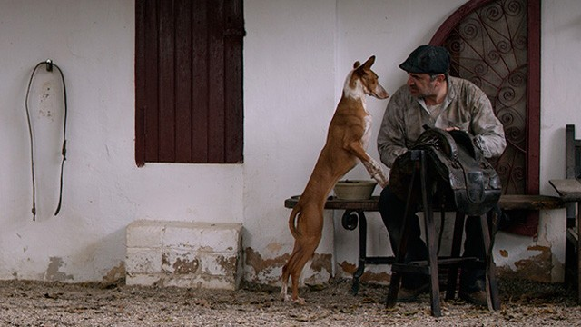 Cocote, historia de un perro. Cortometraje español con Joaquín Climent