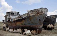 Aral, el mar perdido. Cortometraje documental de Isabel Coixet