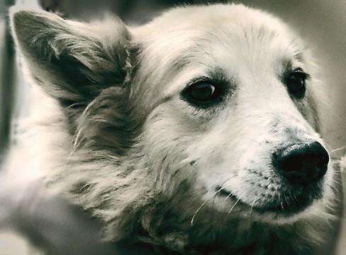 Canis Somnus: En un sueño canino. Cortometraje argentino Axel Zeballos