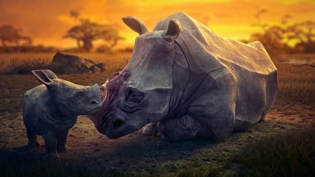 Dream. Cortometraje de animación sobre la extinción de la vida salvaje