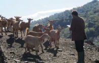 Como una cabra (Like a goat). Cortometraje dirigido por Kai Adam