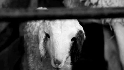 Forasteros. Cortometraje y falso documental de Pablo Silva González