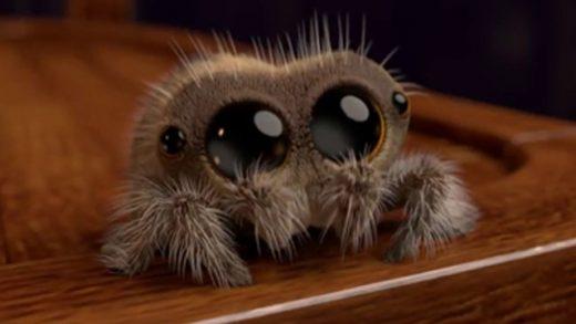 Lucas the Spider cortometrajes online