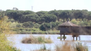 Oasis refinado. Cortometraje documental español de Alfonso Díaz