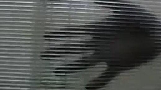 Artimia. Cortometraje argentino experimental de Osvaldo Cristian Huja