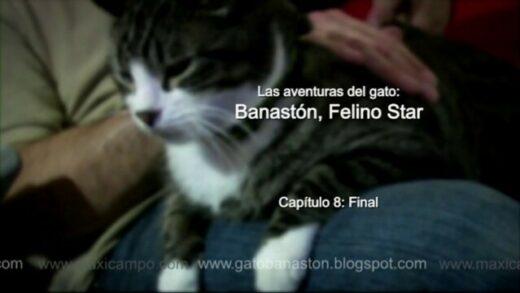 "Banastón, Felino Star - Capítulo 8 ""Final"". Webserie familiar Maxi Campo"