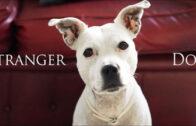 Stranger Dog