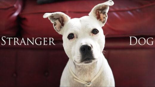 Stranger Dog. Cortometraje y comedia de cine fantástico de Adrian Leon