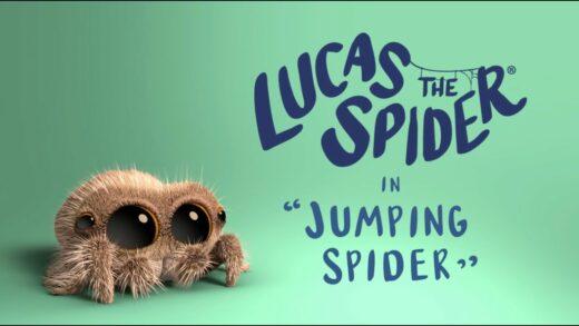 Lucas la araña - Araña Saltadora. Cortometraje de animación Joshua Slice